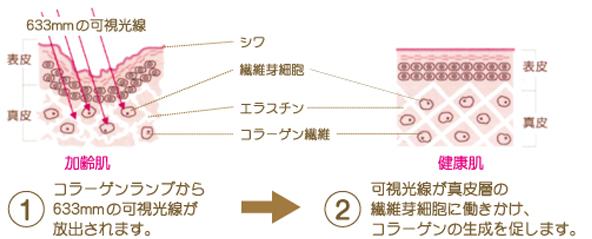 コラーゲンランプエステの仕組み
